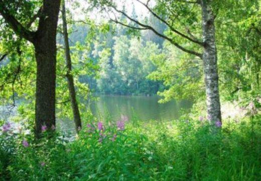 FinnSource - Summer Newsletter-1200x900